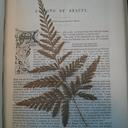 Photograph of pressed fern in journal