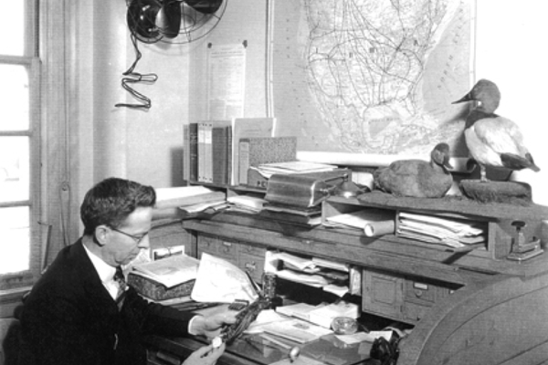 An undated photograph of Frederick C. Lincoln at his desk in Washington, with aluminum bird bands and pliers to his right and a map of North American migratory pathways on the wall.