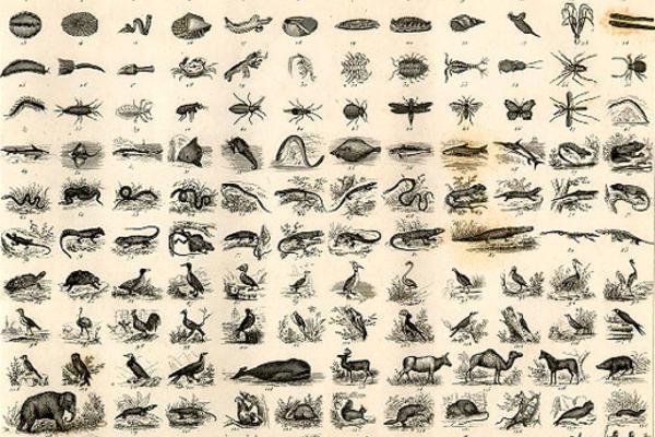 Natural History Chart