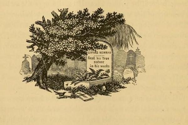 A small woodcut memorialising Edward Newman in the Entomologist following his death in 1876.