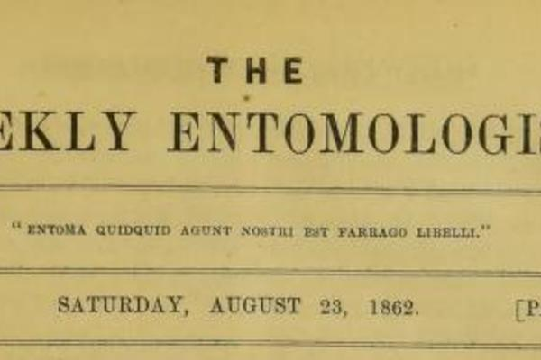 Title page from The Weekly Entomologist