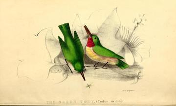 field naturalist