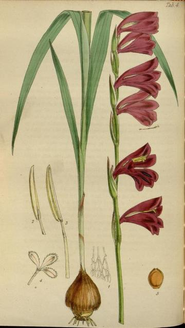 journal of botany