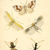 Scientific illustration of various insects